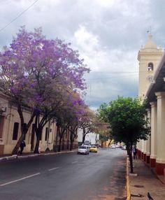 Jacaranda y la Catedral.Asunción -Paraguay
