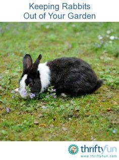 1000 images about plagas y enfermedades en plantas on How do you keep rabbits out of your garden