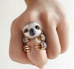 Se você gosta de animais, então vai adorar estes anéis
