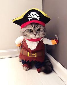 Arrrrhhh matie hand me all yer tuna! Pirate CAT Costume https://suddenlycat.com/shop/hats/pirate-cat-costume/