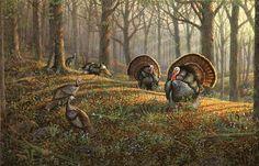 Sam Timm ~ wild turkeys in forest