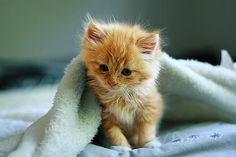 Since I was a little girl, I have always wanted a fluffy orange kitten!!! One day! *sigh*