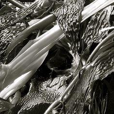 fineartamerica seaweed - Google-søgning