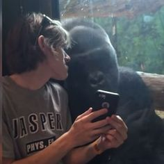 Animals can be surprisingly human. | A Gorilla Looked On As A Guy Went Through Pics On His Phone