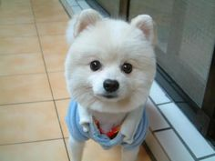 18 Best cute white puppies images | Cute baby dogs, Cute ...