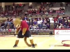 Butch T. Cougar performs Thriller at WSU Volleyball. GO COUGS
