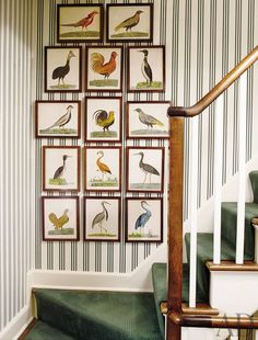 Early-18th-century bird engravings line a wall alongside the rear stair of a New Canaan, Connecticut, home.