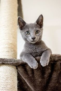 Another delightful RB kitten.