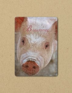 Photo Greeting  Card BEAUTEOUS PIG Eco by FarmFreshPhotography, $4.25