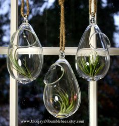 hand blown glass plant globe hanging by bluejaysnbumblebees: ETSY