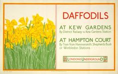 Daffodils at Kew Gardens - Catherine Alexander (1924)