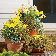 Bring on Spring! | Combine daffodils with citrus hues and fragrant seasonal blooms for colorful containers that keep on giving. This trio combines floriferous 'Superbells Dreamsicle' calibrachoa, fragrant 'Snow Princess' sweet alyssum, and cool-weather 'Sunsatia Lemon' nemesia.