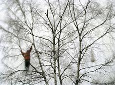 http://helsinkischool.fi/artists/janne-lehtinen/portfolio/sacred-bird