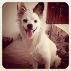 Mora - My part time pet. Corgi, Pets, Animals, Animaux, Corgis, Animal, Animales, Animais