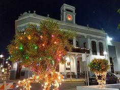Christmas In Puerto Rico, Christmas Tree, Holiday Decor, Home Decor, Teal Christmas Tree, Decoration Home, Room Decor, Xmas Trees, Christmas Trees