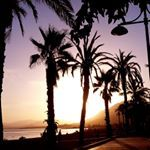 VERT CACTUS Cactus, Celestial, Sunset, Photos, Instagram, Outdoor, Green, Outdoors, Pictures