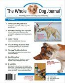 Herbal and home remedy pain relief for dogs