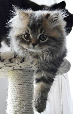 ♔ Sweet kitty