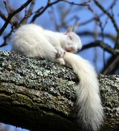 Albino Squirrel. I love how it's holding its tail like a security blanket.