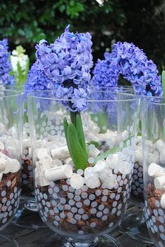 krokus blumentopf pflanzen küche arbeitsplatte deko | pflanzen, Terrassen ideen