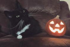 Scary Frights & Autumn Nights