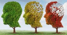 Brain Changes that Occur with Age
