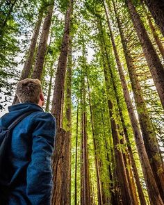 24 Hours in Rotorua: Forest Fun