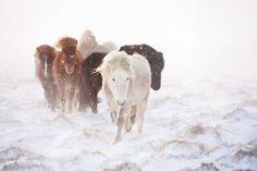 www.horsealot.com, the equestrian social network for riders & horse lovers   Equestrian Photography : Gigja Einarsdottir.
