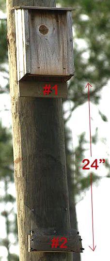Building a pup catcher for a bat house