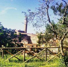 L'Orto dei Tolomei di Siena
