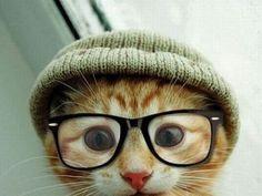 Hipster kitten