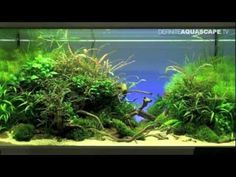 Aquascaping Planted Aquarium | Aquascaping - The Art of the Planted Aquarium 2012, part 1