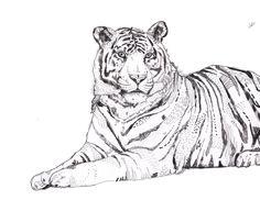 sandra dieckmann Sandra Dieckmann, Tiger Art, Illustration Art, Illustrations, Artist, Design, Animaux, Artists, Illustration
