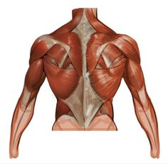ArtStation - Last of March doodles, John Grello Human Anatomy Art, Anatomy For Artists, Anatomy Study, Body Sketches, Anatomy Sketches, Anatomy Drawing, Muscle Anatomy, Body Anatomy, Body Reference