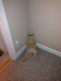 目を光らせる猫