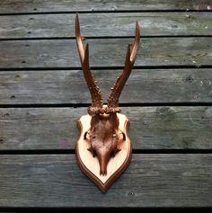 Stor kobber dreng via Gevir Og Horn - Antlers. Click on the image to see more!