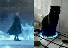 Gellert Grindelwald, Albus Dumbledore, Harry Potter Quotes, Fantasy Dragon, Fantastic Beasts And Where, Harry Potter Universal, Animal Memes, Kittens Cutest, Hogwarts