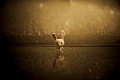 Wallpaper, funny wallpapers, funny backgrounds and rabbit HD photo by Hans Eiskonen (@eiskonen) on Unsplash