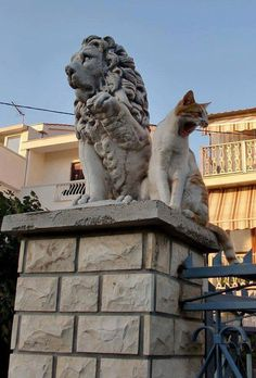 Photo two lions by timo nyman Cover Photos, Cat Art, Lions, Dog Cat, Lion Sculpture, Kitty, Poses, Statue, Pure Products