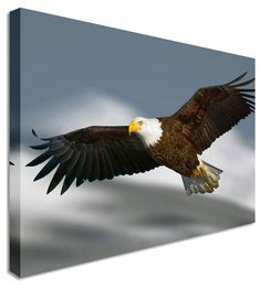 Flying Eagle by Abstract Art Canvas Printers, Canvas Art Cheap Prints by www.canvastown.co.uk