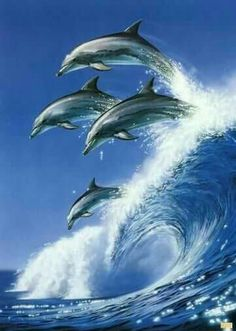 Dolphins love to surf // via Ozgur Yunuslar Golfinhos gostam de surfar // via Ozgur Orcas, Photo Dauphin, Beautiful Creatures, Animals Beautiful, Unique Animals, Vida Animal, Fauna Marina, Water Animals, Wild Animals