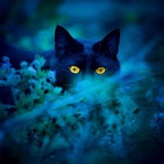 """""""Every dog will have his day, but the nights are reserved for the cats."""" --Author Unknown"""