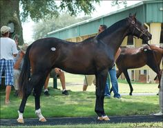 OBS Select Yearling Sale | Flickr - Photo Sharing!