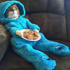 Poor cat dressed up as a cookie monster.  Doesn't look very comfortable...  But looks so cute! #kitty #adorable
