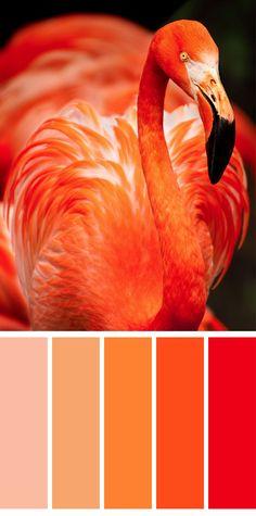 Vibrant summer color pallet