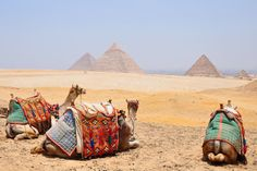 Camels waiting for a rider near the pyramids at Giza, Egypt. http://www.traveladdicts.net/2011/07/giza-pyramids-and-egyptian-antiquities.html#more