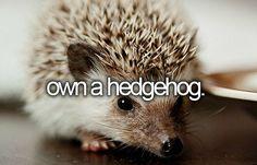 Own a hedgehog... Idk though,  like,  where would I keep martin freeman?
