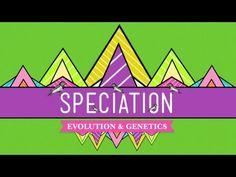Speciation: Of Ligers & Men - Crash Course Biology #15 - YouTube