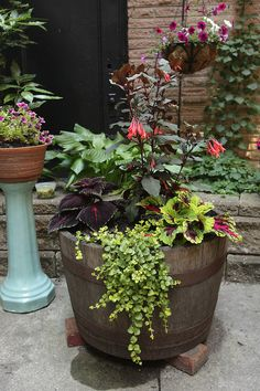 Containers with flowers in an urban back garden. An old whisky barrel holds Coleus, Lysimachia, Fuchsia. In the background there is a hosta lily, and a hanging basket of petunias. Barrel Garden Ideas, Wine Barrel Garden, Half Barrel Planter Ideas, Barrel Garden Planters, Whiskey Barrel Flowers, Whiskey Barrel Planter, Whiskey Barrels, Planters For Shade, Flower Planters