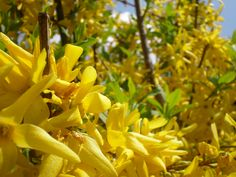 YellowInGreen